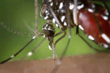 produit anti moustiques